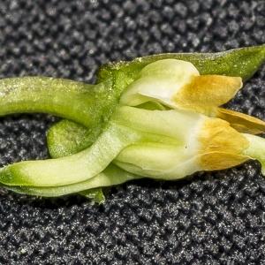 Photographie n°294020 du taxon Viola hirta L. [1753]