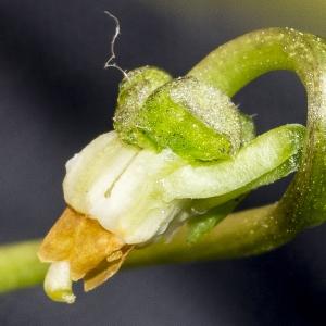 Photographie n°294022 du taxon Viola hirta L. [1753]