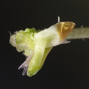 Photographie n°294023 du taxon Viola hirta L. [1753]