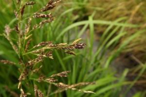 Florent Beck, le 12 juillet 2014 (Morlanne (plaine alluviale du Luy de Béarn))