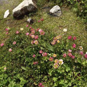 Photographie n°343859 du taxon Ranunculus L. [1753]