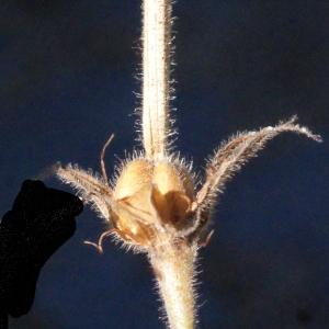 Photographie n°372894 du taxon Geranium sylvaticum L. [1753]