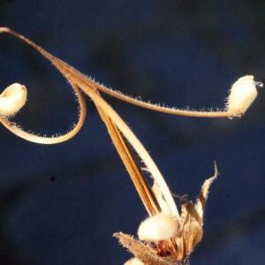 Photographie n°372930 du taxon Geranium sylvaticum L. [1753]