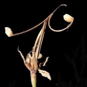 Photographie n°373854 du taxon Geranium sylvaticum L. [1753]