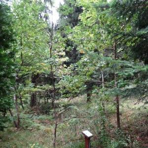 Photographie n°684665 du taxon Quercus robur L. [1753]