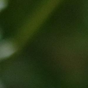Photographie n°705695 du taxon Trifolium montanum L.