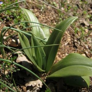 Photographie n°738097 du taxon Orchidaceae