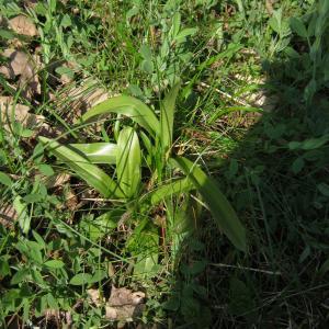 Photographie n°738101 du taxon Orchidaceae