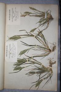 GUITTOT Herbier, le  4 juin 1905 (Olonne-sur-Mer (Olonne))