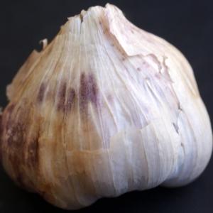 Photographie n°901291 du taxon Allium sativum L. [1753]