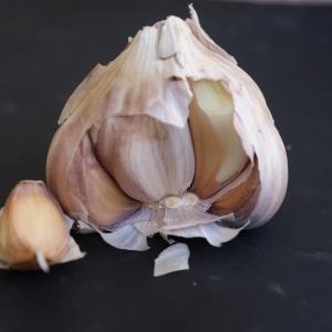 Photographie n°901293 du taxon Allium sativum L. [1753]