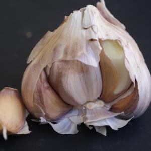 Photographie n°901294 du taxon Allium sativum L. [1753]