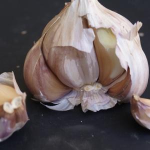 Photographie n°901295 du taxon Allium sativum L. [1753]