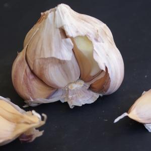 Photographie n°901298 du taxon Allium sativum L. [1753]