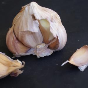 Allium sativum var. subrotundum Gren. (Ail)