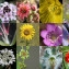 Florent Beck - Angiospermes
