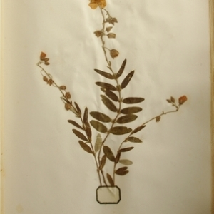 Photographie n°990810 du taxon Helianthemum vulgare Gaertn.