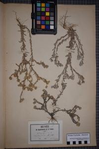PONTARLIER-MARICHAL Herbier , le  1 août 1880 (La Roche-sur-Yon)