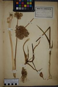 PONTARLIER-MARICHAL Herbier , le  1 juillet 1851 (Vouillé-les-Marais)