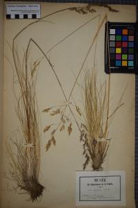 PONTARLIER-MARICHAL Herbier , le  1 juin 1850 (Dompierre-sur-Yon (Rortheau))