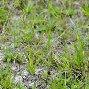 Photographie n°1930621 du taxon Dactylorhiza fuchsii (Druce) Soó [1962]
