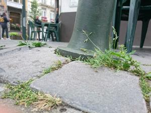 Sacha d'Hoop, le 25 juin 2017 (Saint-Gilles)
