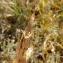 Florent Beck - Gentiana pneumonanthe L.