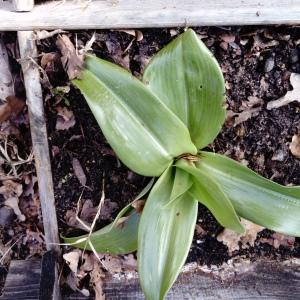 Photographie n°2142885 du taxon Orchidaceae