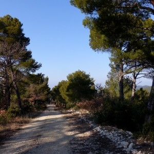 Photographie n°2143359 du taxon Pinus halepensis Mill. [1768]