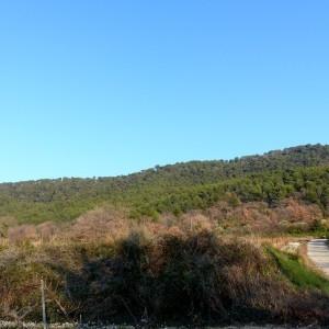 Photographie n°2143365 du taxon Pinus halepensis Mill. [1768]