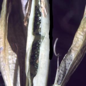 Photographie n°2144444 du taxon Gentiana acaulis L. [1753]