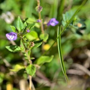 Photographie n°2145962 du taxon Potentilla L.