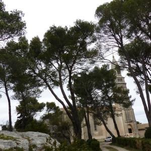 Photographie n°2151492 du taxon Pinus halepensis Mill. [1768]