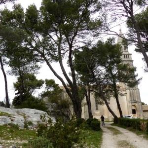 Photographie n°2151496 du taxon Pinus halepensis Mill. [1768]