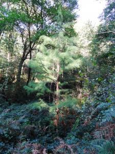 Bigou Alain, le 30 septembre 2016 (Tournay (Arboretum))