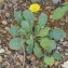Asteraceae [nn100897] par Christine Jourdan le 18/07/2018 - Beaumont
