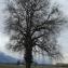 Chêne pédonculé [nn75316] par YvonBERNARD le 20/10/2018 - Pontcharra