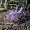 fleurs mauves [nn0] par Val Kasa le 27/10/2018 - Païta