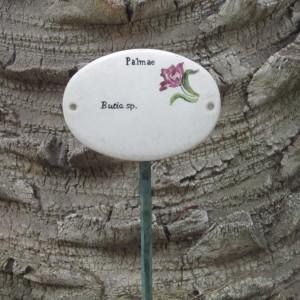 Photographie n°2270535 du taxon Butia Becc.