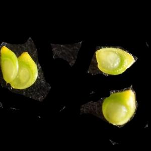 Photographie n°2274160 du taxon Ranunculus bulbosus L. [1753]