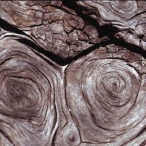 Photographie n°2275747 du taxon Larix decidua Mill.
