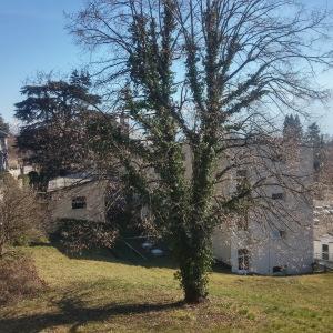 Tilia cordata Mill. [nn68299] par mercier.chamorand@... le 18/02/2019 - La Tronche