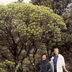 Photographie n°2278023 du taxon Euphorbia dendroides L. [1753]