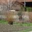Salix alba L. [nn59255] par Société Botanique Gentiana le 13/03/2019 - Moirans
