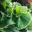 Arbuste de jardin  [nn0] par loue.pierreyves le 02/02/2019 - Grand'Rivière