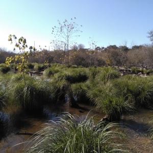 Photographie n°2295349 du taxon Carex paniculata L.
