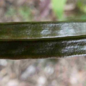 Photographie n°2301596 du taxon Arabis sp.