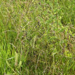 Photographie n°2313692 du taxon Fabaceae