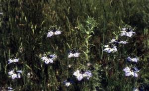 Liliane Roubaudi, le  7 juin 1992 (Valensole)