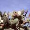 Opuntia tuna auct. [nn133002] par Liliane Roubaudi le 23/09/2000 - Tunisie